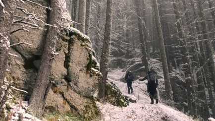 Mountainside Romanian Forests, bears, wolves and vampires