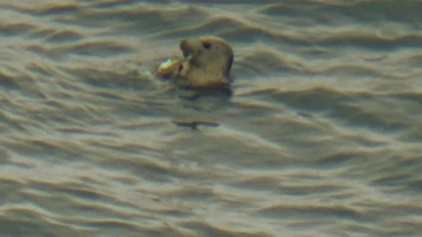 Seal spotting between Brixham and Kingswear on teh south west coast path